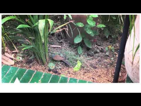 CuriousCities Marrakech: Le Jardin Restaurant