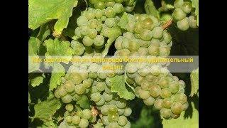 Как сделать сок из винограда быстро,удивительный рецепт