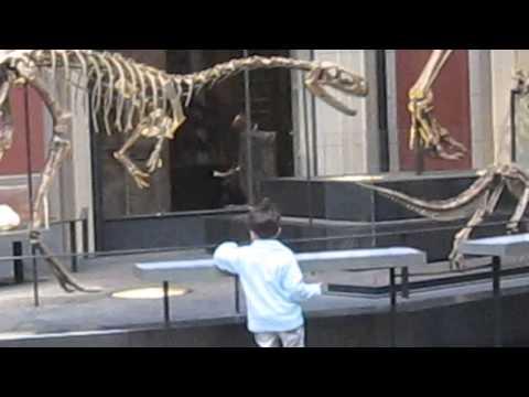 animali preistorici al Museum für Naturkunde di Berlino