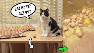 100 eggs  how many will the cat break?