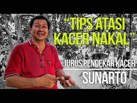 KISAH SUKSES : Sunarto Atasi Kacer Gacor NAKAL Sebelum Lomba
