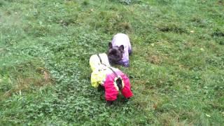 Маруся и Ева (знакомство или танцующие собаки)