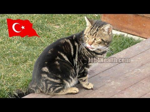 Вопрос: Чем объяснить любовь человека к кошкам?