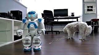 Robot + Dog + Pop-Tart = ?