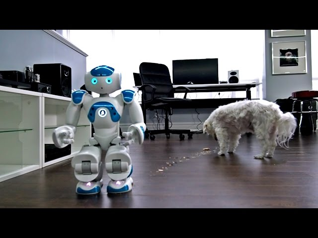 Robot fails miserably at giving this dog a treat (VIDEO