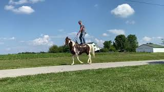 SOLD Franklin, red and white gaited spotted gelding for sale. Trail horse