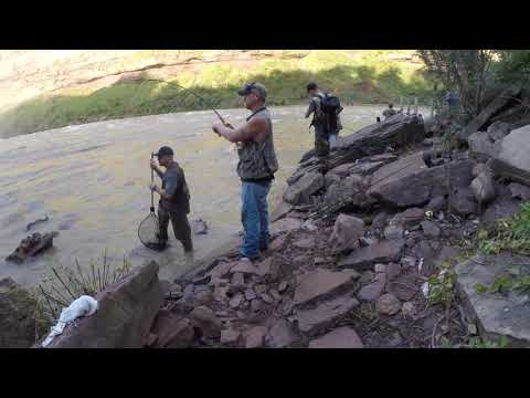 Salmon Fishing On The Genesee River