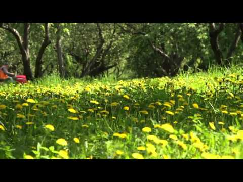 Landscaping Company Lakeland FL