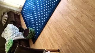 ルンバに怖がる柴犬.