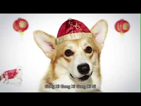Happy Chinese New Year ! Dog 2018|gong Xi fa Cai