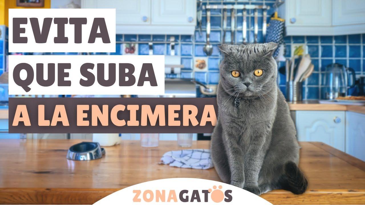 Cómo EVITAR que tu gato se SUBA A LA ENCIMERA de la cocina ✔️ (o a cualquier otro mueble)