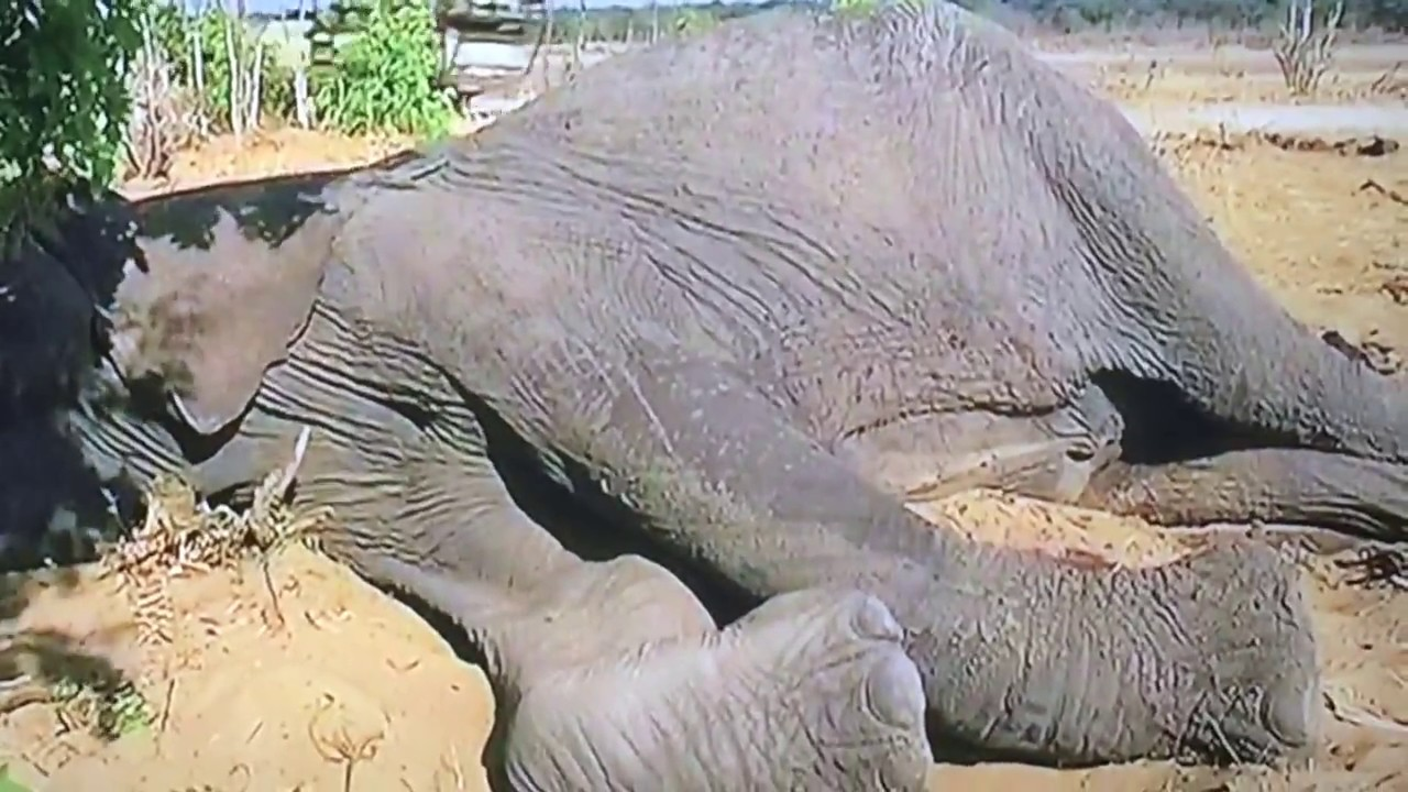 mali of manila zoo ir The elephant mali may be kept outside manila zoo—but only while the place that has been her home for the last three decades is undergoing renovation after receiving an offer from an animal.