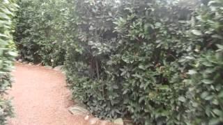 видео Создаем сад-лабиринт