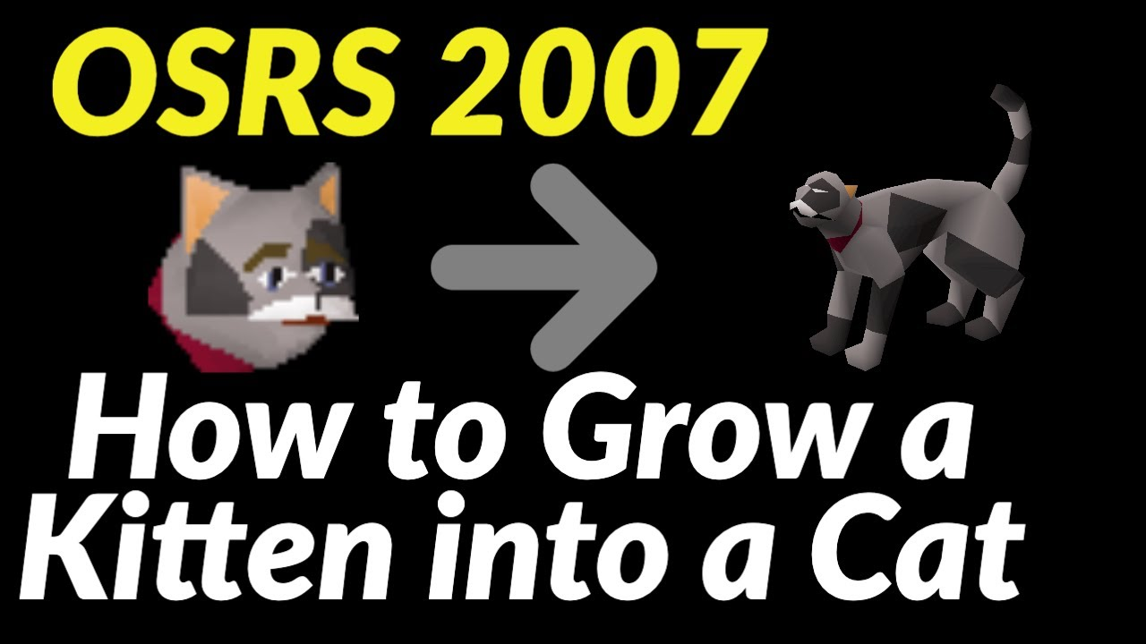 How To Grow A Kitten Into A Cat Osrs 2007 Youtube