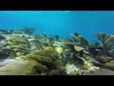 Scuba Diving in Molasses Reef Key Largo