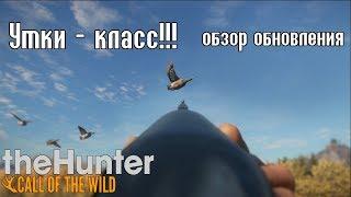 Утиная охота! ОБЗОР и ПЕРВЫЙ ВЗГЛЯД theHunter: Call of the Wild патч 1.25