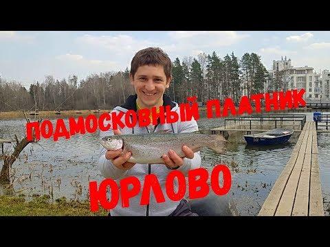 Платный пруд в Юрлово. Ловля форели, платная рыбалка 2019