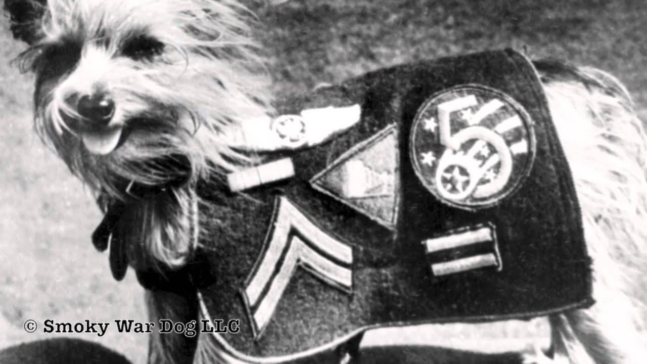 Dog Art Today: Smoky the Dog Hero of WW II