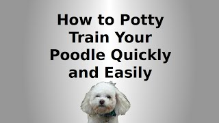 How To Potty Train Your Poodle Quickly And Easily