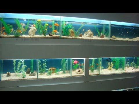 Curso Loja de Aquários - Adaptação dos Peixes