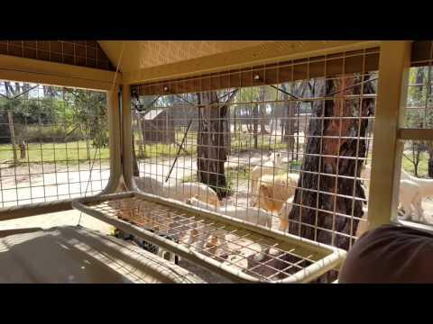 Lions Joburg Lion Park