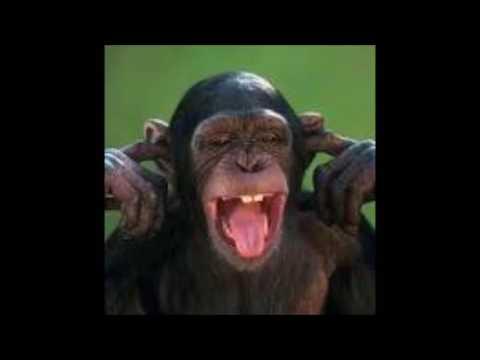 MonkeyBiz 1 hour