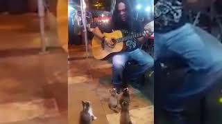 Loving Kitties Come To Listen To Street Singer in Malaysia
