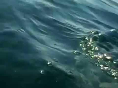 Rare Species Of Jellyfish