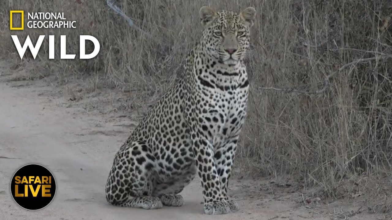 Safari Live - Day 370 | Nat Geo Wild
