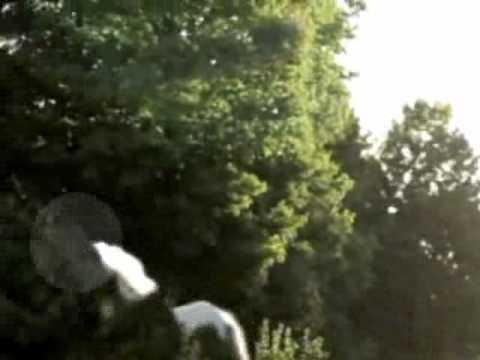 Rumoured Unicorn Sighting Reported In Don Valley - YouTube  Rumoured Unicor...