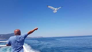 Летять нибы чайки....