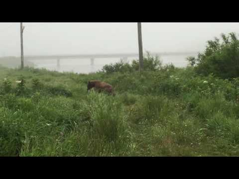 Поселок Озерновский. Пурга 2016. Косалапый хочет кушать