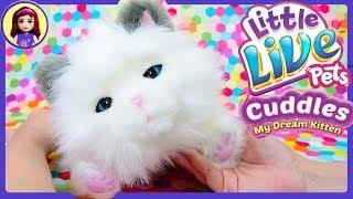 My Dream Kitten Cuddles Little Live Pets Review New Pet Adoption Kids Toys