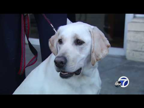 Dogs Sneeze And Cough As Canine Flu Spreads In South Bay