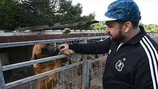 Sam Hammington Witnesses S. Korea Dog Farm