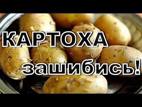 рецепты картофеля в домашних условиях