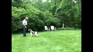 Training a dog to STAY and RECALL
