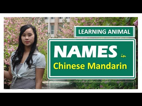 Learning Animal Names in Chinese Mandarin.