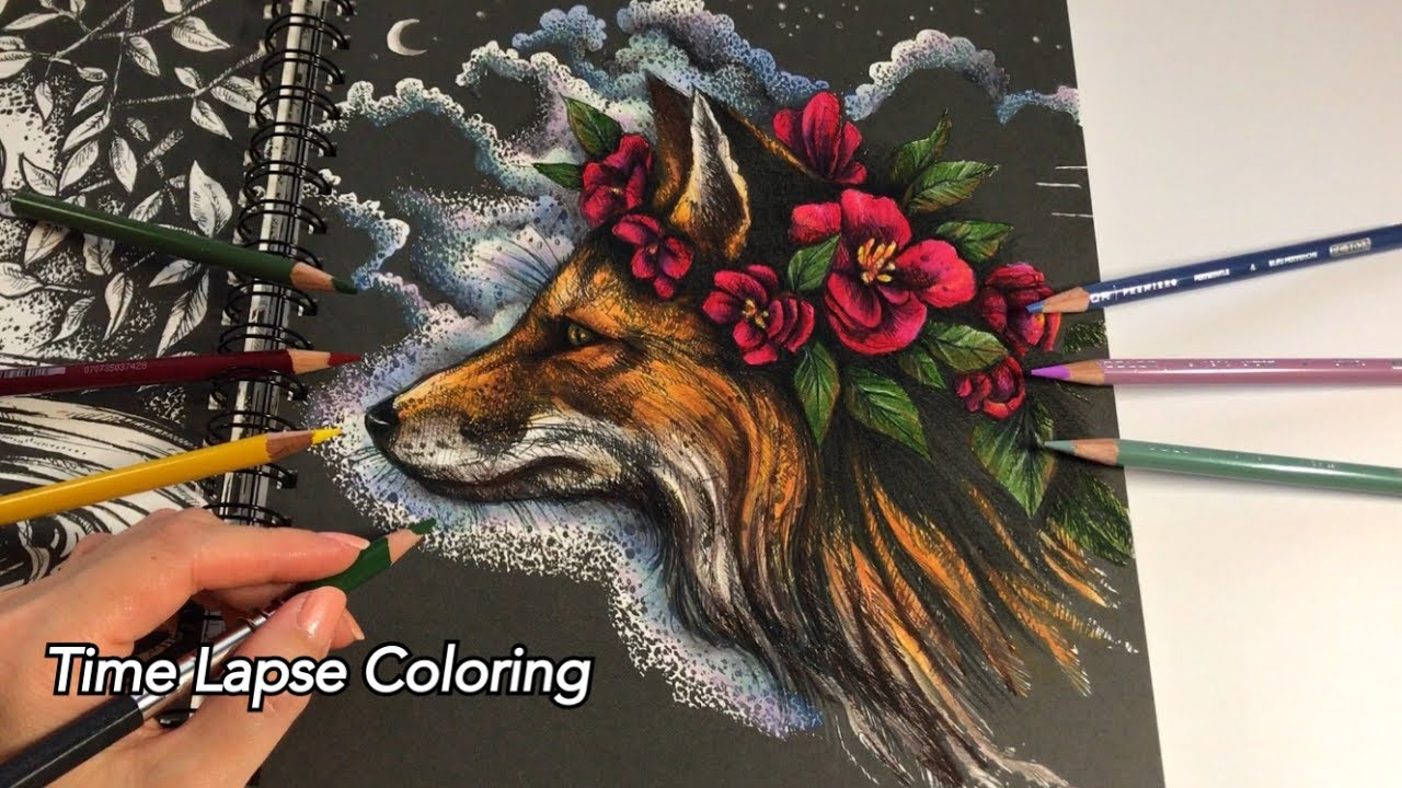 Time Lapse Coloring The Midnight Fox Ticket To Dreams Coloring Book Youtube