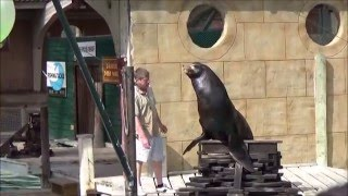 Sea Lion Show 2015 - Flamingo Land Theme Park