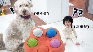 아기와 강아지 두뇌 대결! 과연 누가 더 머리가 좋을것…