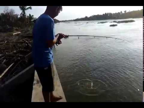 ตกปลาแม่น้ำท่าจีน(บางกระทึก)