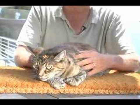 Real Live Talking Cat #3