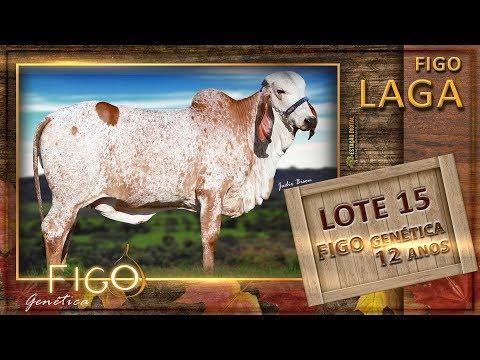 LOTE 15 - FIGO LAGA - HCFG 1468
