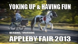 Appleby Horse Fair 2013 - Yoking Up & Having Fun - Gypsy Cob Vanner Horse