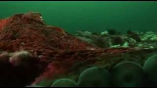 Unternehmen Oktopus - Vorstoß ins Reich der Riesenkraken - Arte - Teil 2 von 3