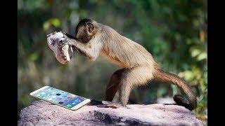 Funny Monkey a lots eating Monkey Funny Scene Nhạc thiếu nhi remix sôi động