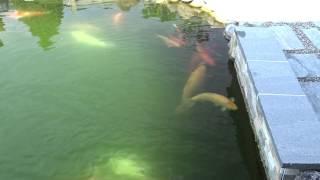Neuteich Syndrom - Wasser bleibt grün