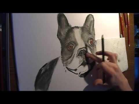 Drawing Französische Bulldogge Speedpainting Pastelfarben Tiere