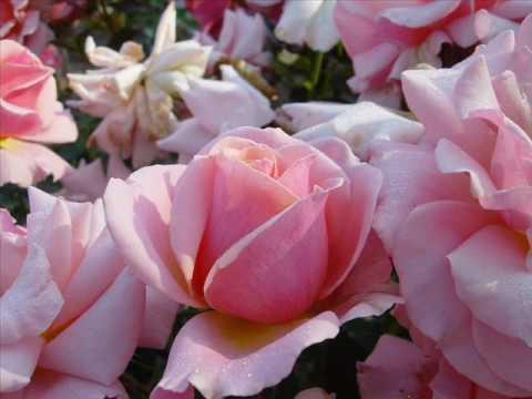 """Pequeña flor""-Fausto Papetti"